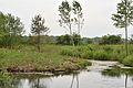 Kreis Pinneberg, Naturschutzgebiet WDPA-ID 165841 Tävsmoor-Haselauer Moor 02.jpg