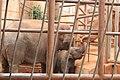 Kunming City Zoo Elephants (9964705504).jpg