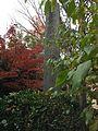 Kyoto Myokyoji Boshin chinkon ura.jpg