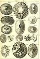L'histoire naturelle éclaircie dans deux de ses parties principales, la lithologie et la conchyliologie - dont l'une traite des pierres et l'autre des coquillages - ouvrage dans lequel on trouve une (14595123109).jpg