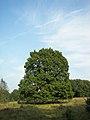 Lüneburger Heide 010.jpg