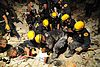 LA County SAR pulls Haitian woman from earthquake debris 2010-01-17.jpg