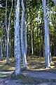 LSG Kühlung - Nienhäger Holz (Gespensterwald) (114).jpg