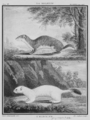 La Belette et Hermine - Weasel and Hermine - Gallica - ark 12148-btv1b2300254t-f31.png