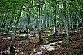 La foresta.jpg