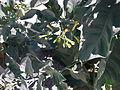 La paz plant life 12.JPG