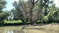 Lacul Beleu priveliște 9.jpg