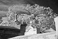 Lafayette Cemetery.jpeg