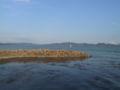 Lago Trasimeno 07.JPG