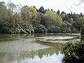 Lake in the woods - geograph.org.uk - 163419.jpg