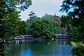 Lake with swans 1 天鹅,湖.jpg