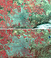 Landsat View, Santiago, Chile - Flickr - NASA Goddard Photo and Video.jpg