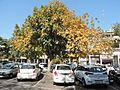 Landscape view of sector 17 Chandigarh city in spring season -2017.jpg
