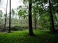 Landschaftsschutzgebiet Horstmanns Holz Melle -Waldende- Datei 2.jpg