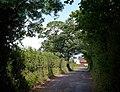 Lane at Nynehead - geograph.org.uk - 1394427.jpg