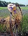Lavender Field Bonnet 7-11 (15635105635).jpg