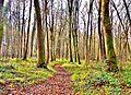 Le sentier GR E 5 dans le grand bois.jpg