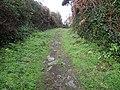 Le sentier cotier pedestre de l'ile de groix - panoramio.jpg