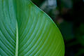 Leaf Laplap (Imagicity 391).jpg