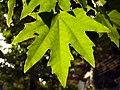 Leaves in iran برگ گلها و گیاهان ایرانی 11.jpg