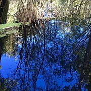 Lettuce Lake reflections.jpg