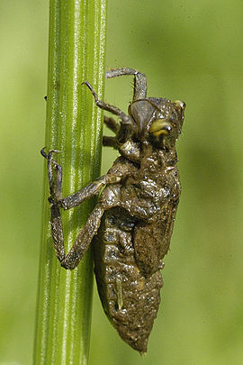 bug πισινό σωλήνα καρτούν σεξ Αμερικανός
