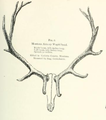 Life Histories of Northern Mammals (1909) Montana Armory Cervus canadensis.png
