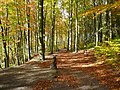 Linacre Beech Wood in Autumn - geograph.org.uk - 599802.jpg