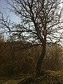 Lis në Rubovc - panoramio.jpg