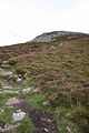 Llanaelhaearn, path to Tre'r Ceiri - geograph.org.uk - 55843.jpg