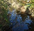 Loantaka Way view of stream with reflections of trees early autumn.JPG