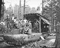 Logging crew and donkey engine, Aloha Lumber Company, ca 1921 (KINSEY 83).jpeg