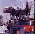 Logging northern Ontario 03.jpg
