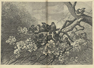 Hector Giacomelli - Work by Giacomelli, published in 1883.