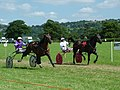 Ludlow Trotting Meet - geograph.org.uk - 413059.jpg