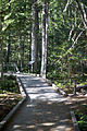 MRNP — Kautz Creek Trail (21691249589) (2).jpg