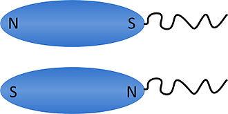 Magnetotactic bacteria - The MTB polarity model