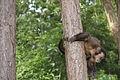 Macaco-prego Manduri 151207 18.JPG