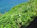 Madeira em Abril de 2011 IMG 1567 (5661927548).jpg