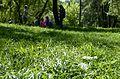 Maksym Rylsky Holosiiv park.jpg
