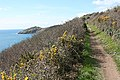 Malker with Rame, on the South West Coast Path 1 - geograph.org.uk - 742258.jpg