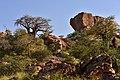 Mapungubwe, Limpopo, South Africa (20550342441).jpg