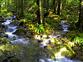 Meandering river in the woods meets another.jpg