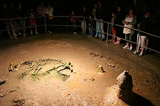 Bears' Cave - Skeleton of a cave bear (Ursus spelaeus) in the Bones Hall