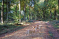Micheldever wood, Hampshire - geograph.org.uk - 1006560.jpg