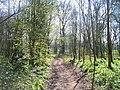 Mid Devon , Knightshayes - Impey Walk - geograph.org.uk - 1271573.jpg