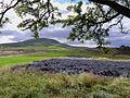 Middleham High Moor Gallops - geograph.org.uk - 679216.jpg