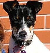 Dog Rescue Sydney Nsw