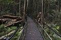 Minnamurra Rainforest - panoramio (21).jpg