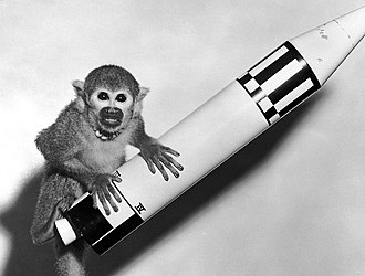 Animals in space - Space pioneer Miss Baker, a squirrel monkey, rode a Jupiter IRBM into space in 1959.